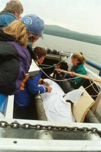 Marine Biologists at Work